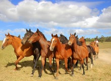 Horses For Courses on Social Media- Short-Form vs. Long-Form Content