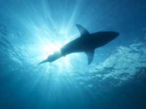 How NOT Appearing on Shark Tank Helped My Business