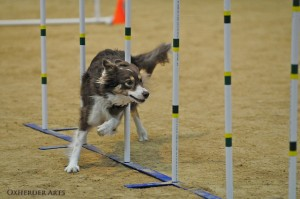 Agility Is The Key To Survival In Good Times And Bad