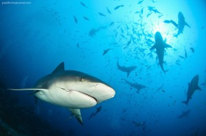 Blaming the Shark: The Importance of Screening for Employee Attitude